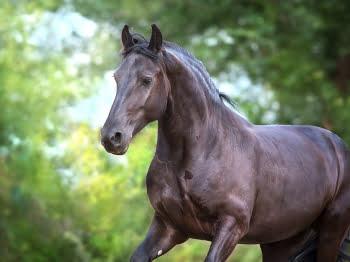 Hoe herken je tekorten bij paarden? Leer waar je op kunt letten