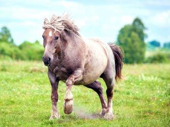Heeft jouw paard overgewicht? Laat hem op een gezonde manier afvallen