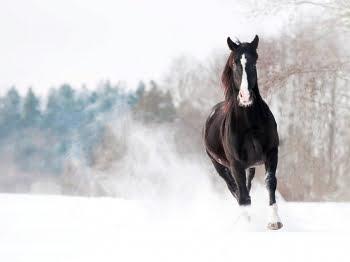 Check of jouw paard klaar is voor het winterseizoen!