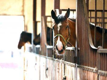 De 7 gevaren van te weinig beweging  – houd jouw paard gezond in de winter!